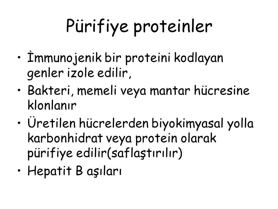 Pürifiye proteinler İmmunojenik bir proteini kodlayan genler izole edilir, Bakteri, memeli veya mantar hücresine klonlanır.