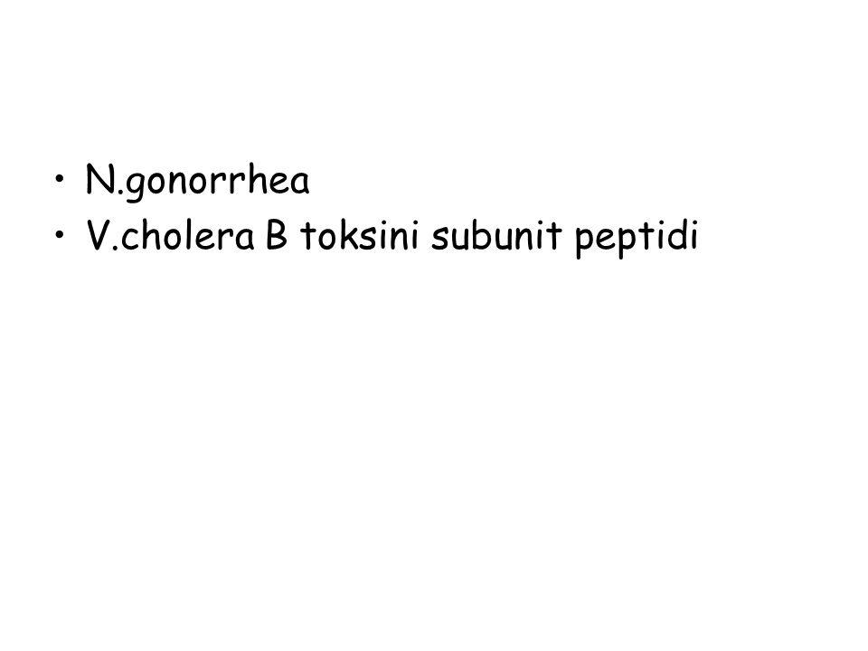 N.gonorrhea V.cholera B toksini subunit peptidi