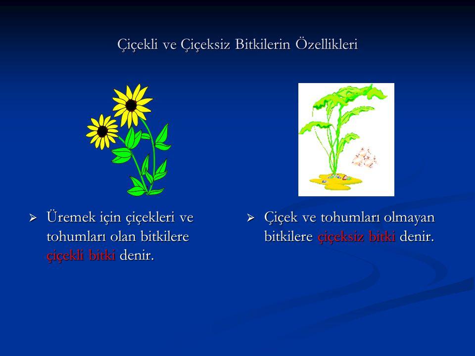 Çiçekli ve Çiçeksiz Bitkilerin Özellikleri