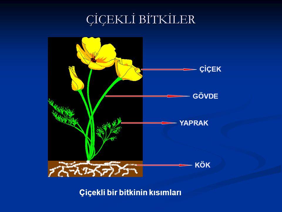 ÇİÇEKLİ BİTKİLER ÇİÇEK GÖVDE YAPRAK KÖK Çiçekli bir bitkinin kısımları