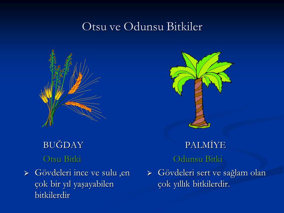Otsu ve Odunsu Bitkiler