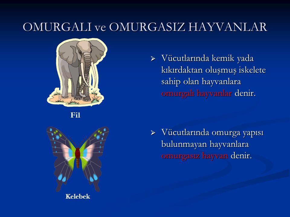 OMURGALI ve OMURGASIZ HAYVANLAR