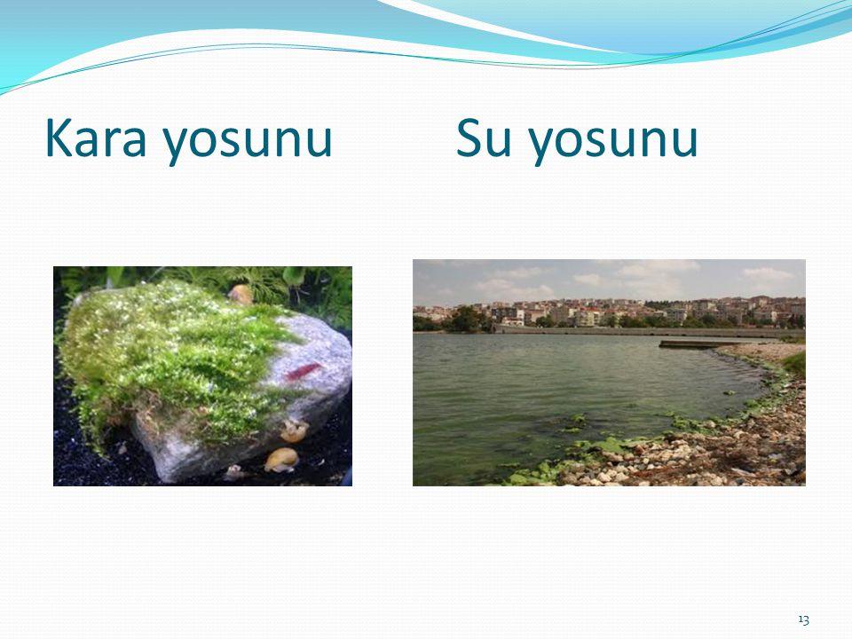 Kara yosunu Su yosunu