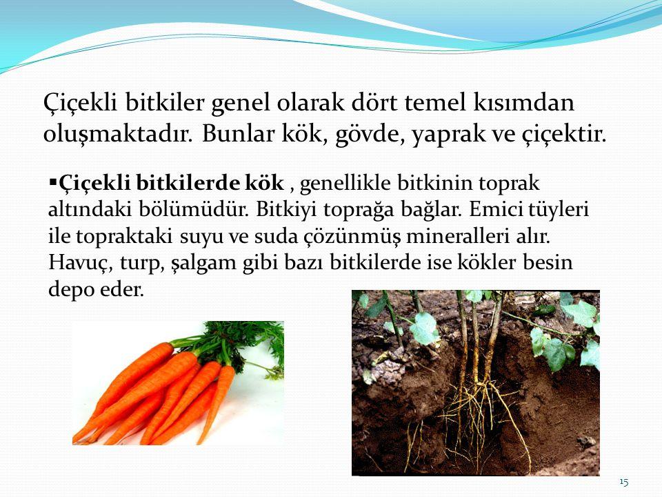 Çiçekli bitkiler genel olarak dört temel kısımdan oluşmaktadır