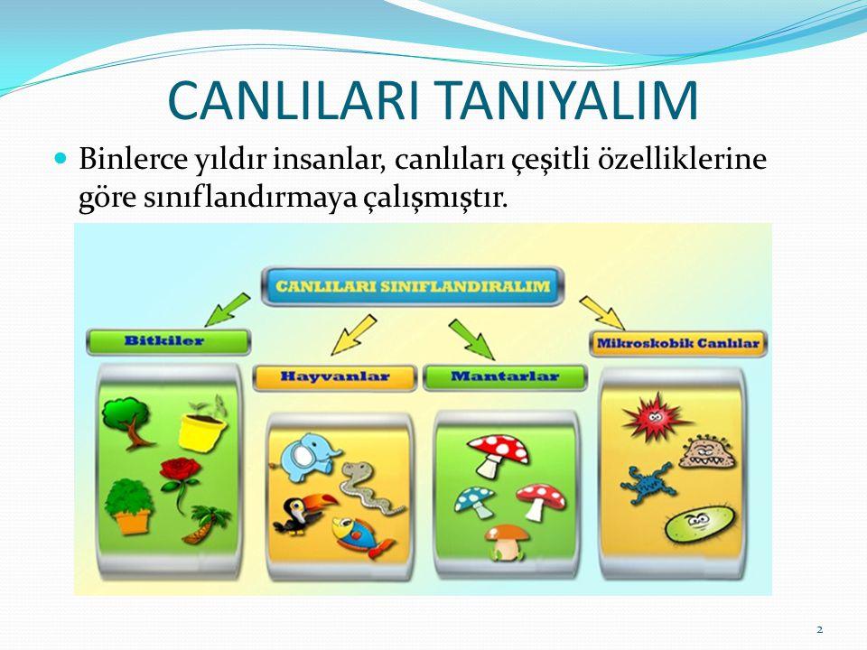 CANLILARI TANIYALIM Binlerce yıldır insanlar, canlıları çeşitli özelliklerine göre sınıflandırmaya çalışmıştır.