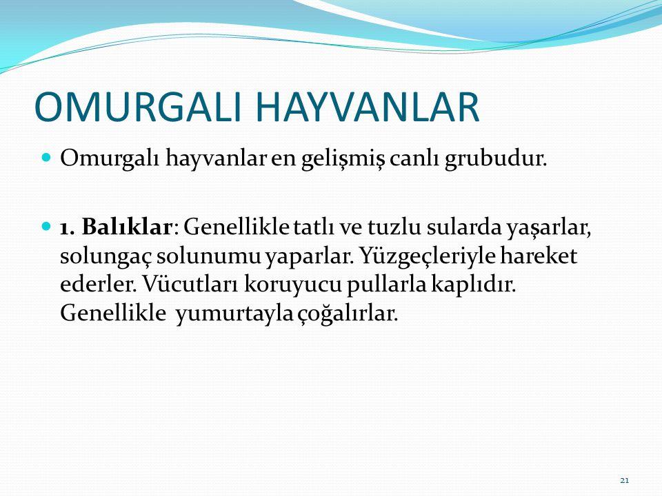 OMURGALI HAYVANLAR Omurgalı hayvanlar en gelişmiş canlı grubudur.