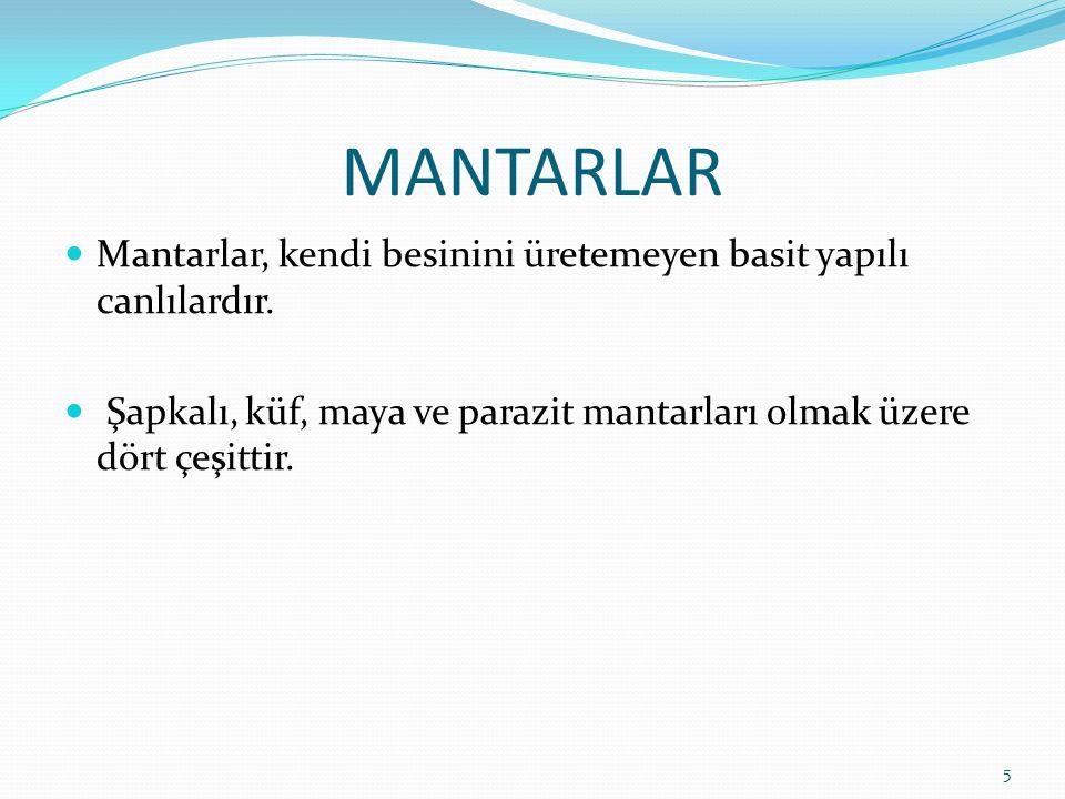 MANTARLAR Mantarlar, kendi besinini üretemeyen basit yapılı canlılardır.