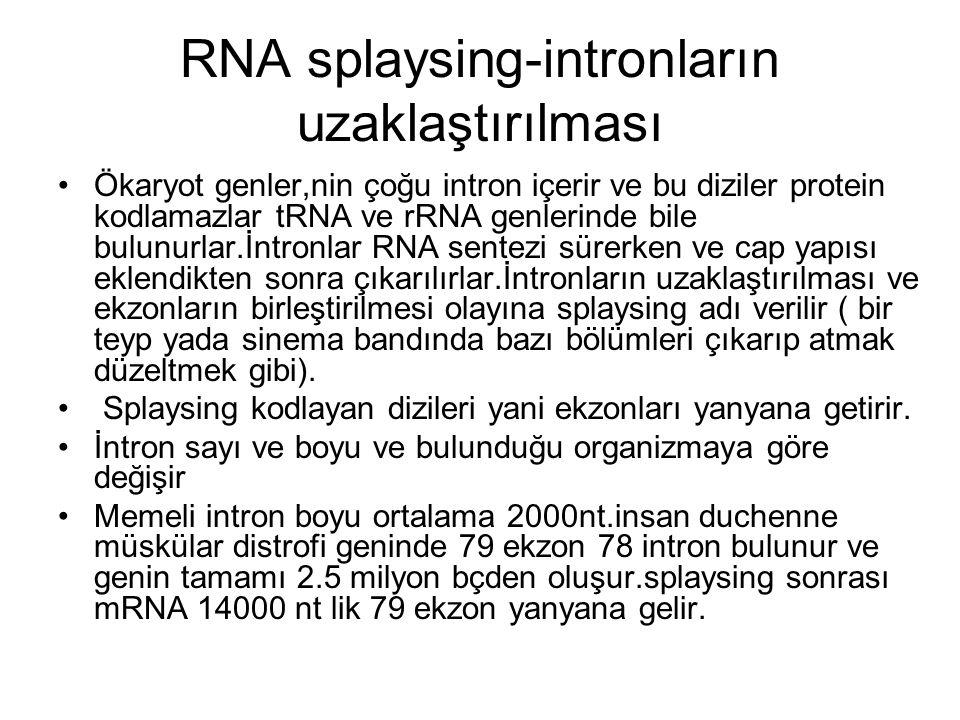 RNA splaysing-intronların uzaklaştırılması