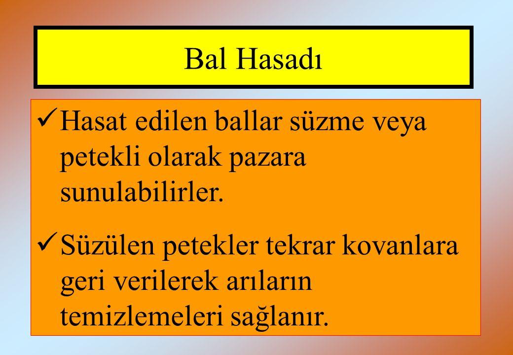 Bal Hasadı Hasat edilen ballar süzme veya petekli olarak pazara sunulabilirler.