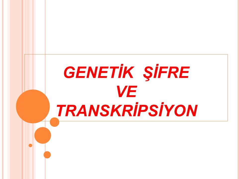 GENETİK ŞİFRE VE TRANSKRİPSİYON