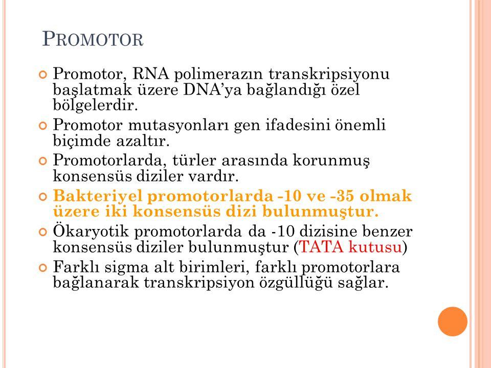Promotor Promotor, RNA polimerazın transkripsiyonu başlatmak üzere DNA'ya bağlandığı özel bölgelerdir.