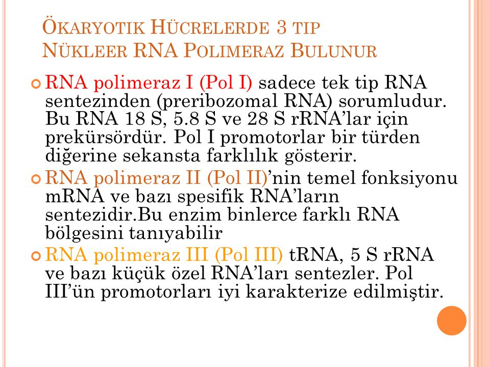 Ökaryotik Hücrelerde 3 tip Nükleer RNA Polimeraz Bulunur