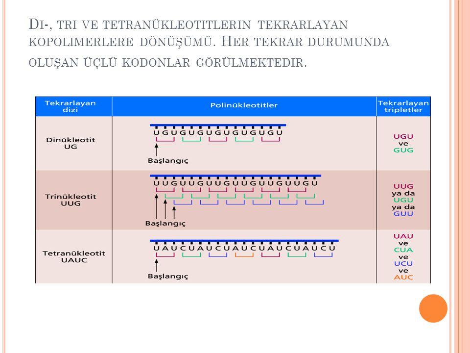 Di-, tri ve tetranükleotitlerin tekrarlayan kopolimerlere dönüşümü