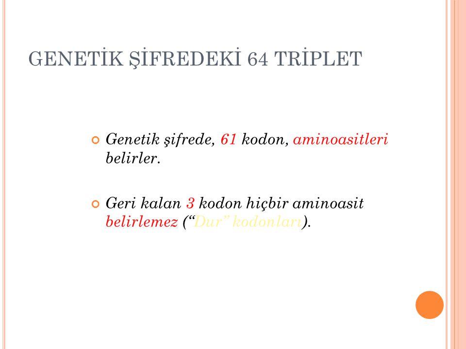 GENETİK ŞİFREDEKİ 64 TRİPLET