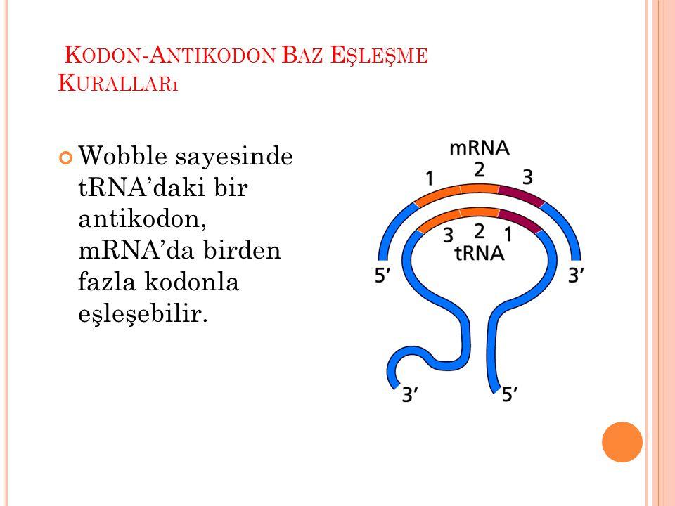 . Kodon-Antikodon Baz Eşleşme Kuralları