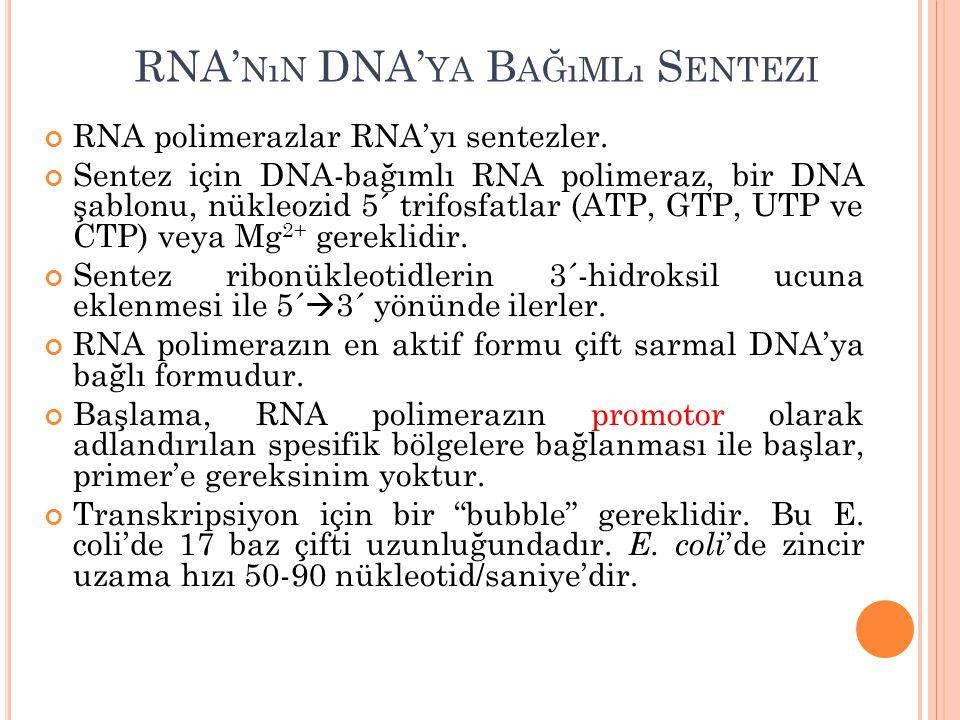 RNA'nın DNA'ya Bağımlı Sentezi