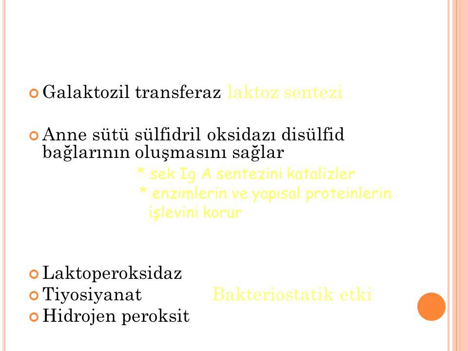 Galaktozil transferaz laktoz sentezi