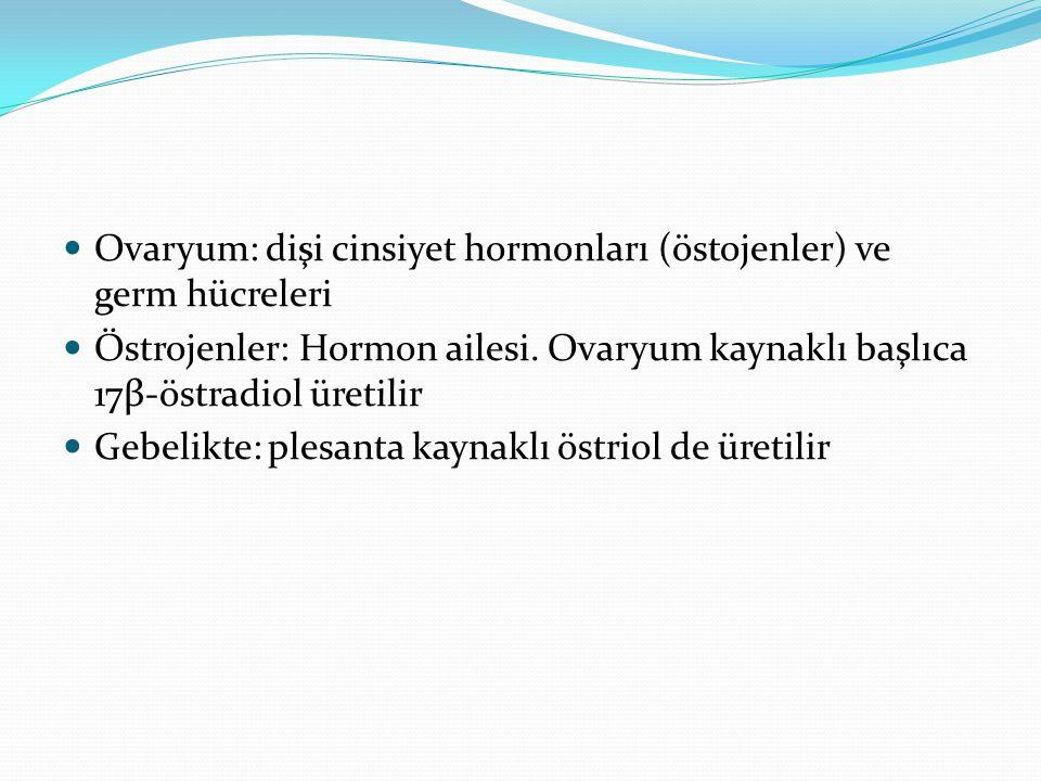 Ovaryum: dişi cinsiyet hormonları (östojenler) ve germ hücreleri