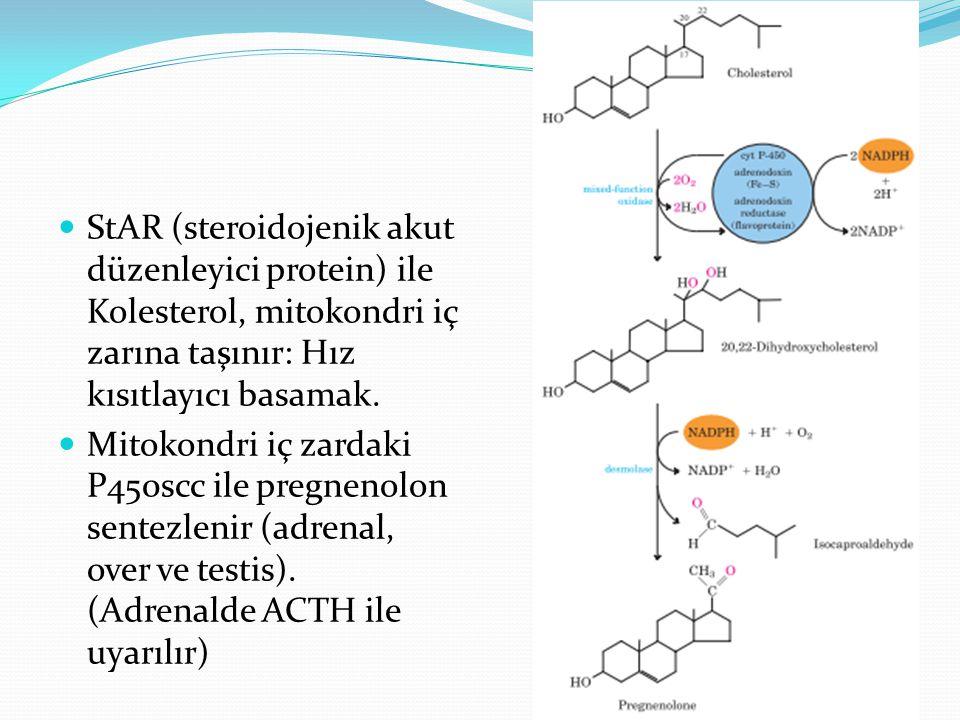 StAR (steroidojenik akut düzenleyici protein) ile Kolesterol, mitokondri iç zarına taşınır: Hız kısıtlayıcı basamak.