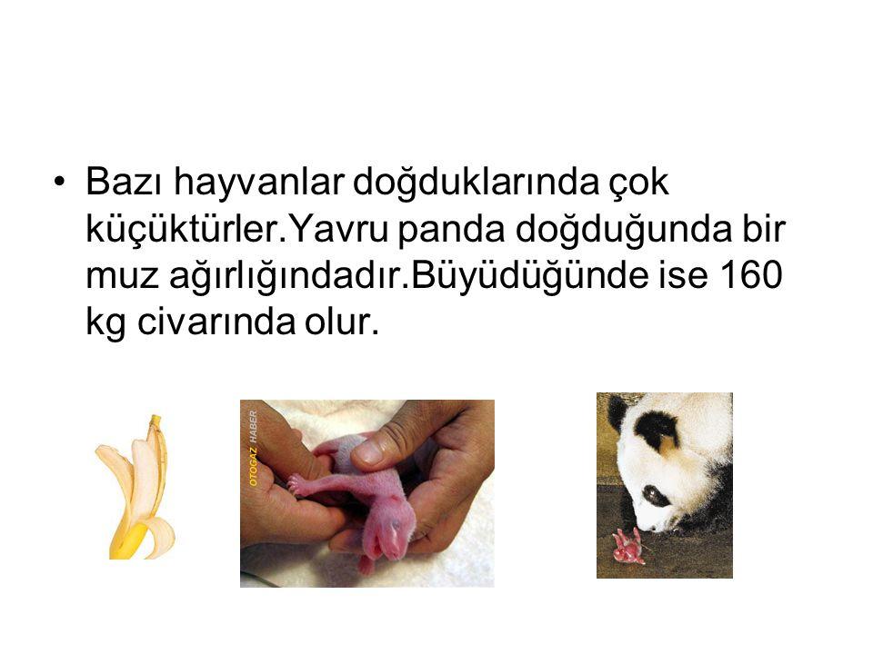 Bazı hayvanlar doğduklarında çok küçüktürler