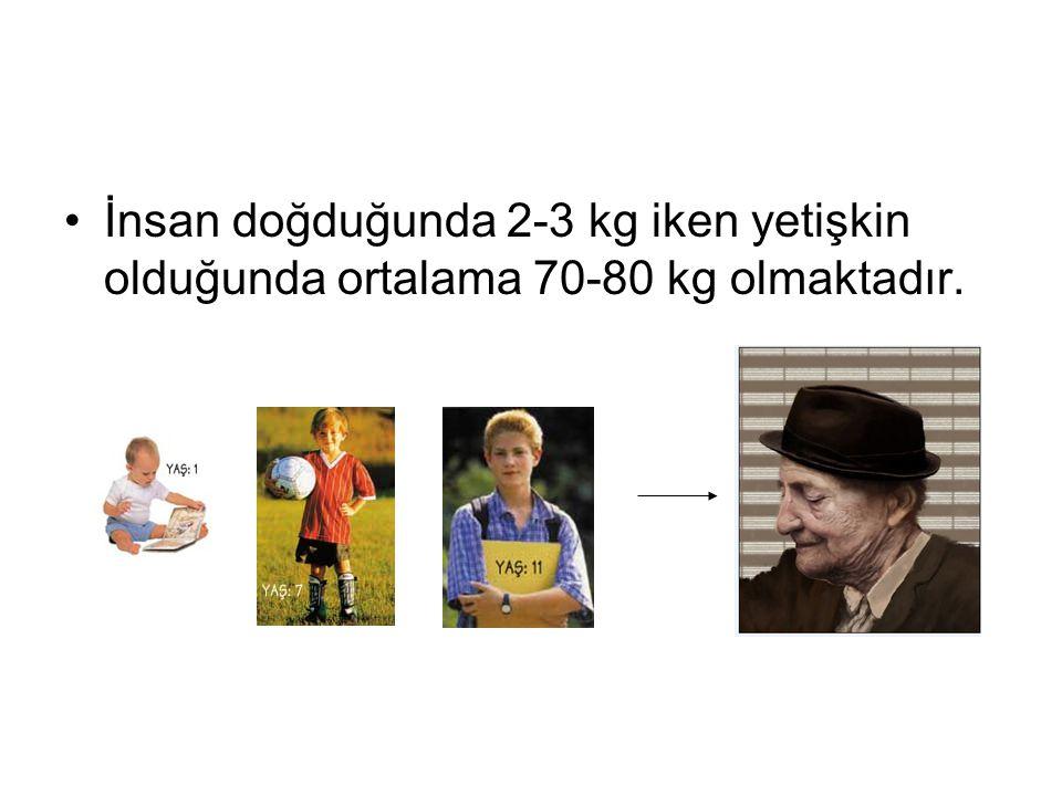 İnsan doğduğunda 2-3 kg iken yetişkin olduğunda ortalama 70-80 kg olmaktadır.