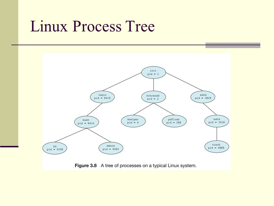 Linux Process Tree