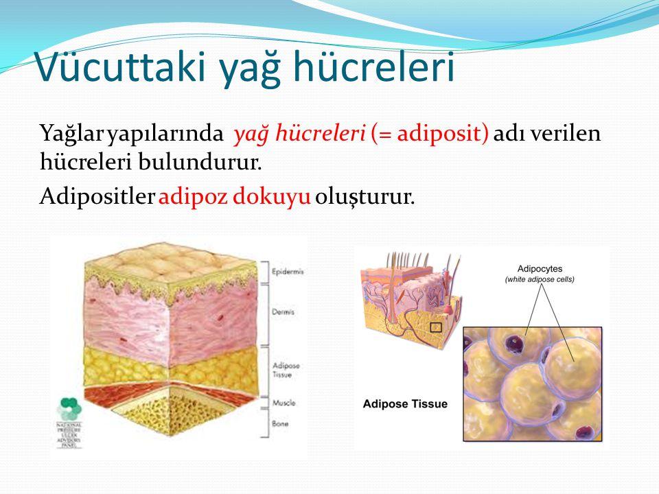 Vücuttaki yağ hücreleri