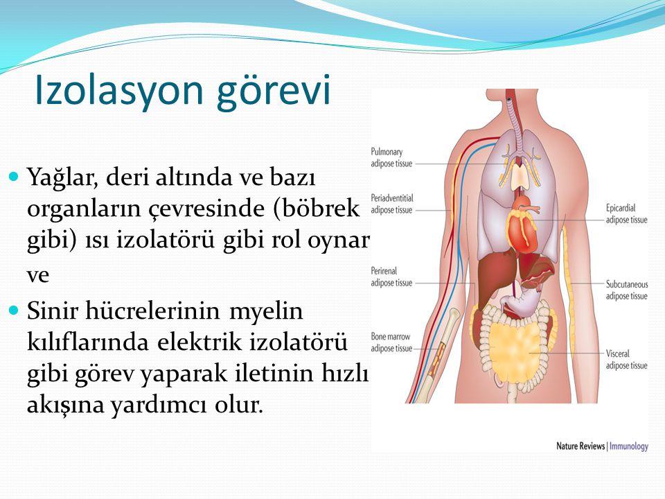 Izolasyon görevi Yağlar, deri altında ve bazı organların çevresinde (böbrek gibi) ısı izolatörü gibi rol oynar.