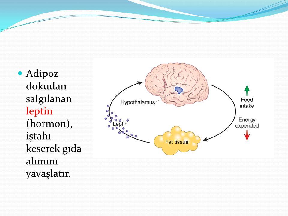 Adipoz dokudan salgılanan leptin (hormon), iştahı keserek gıda alımını yavaşlatır.