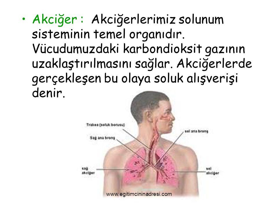 Akciğer : Akciğerlerimiz solunum sisteminin temel organıdır
