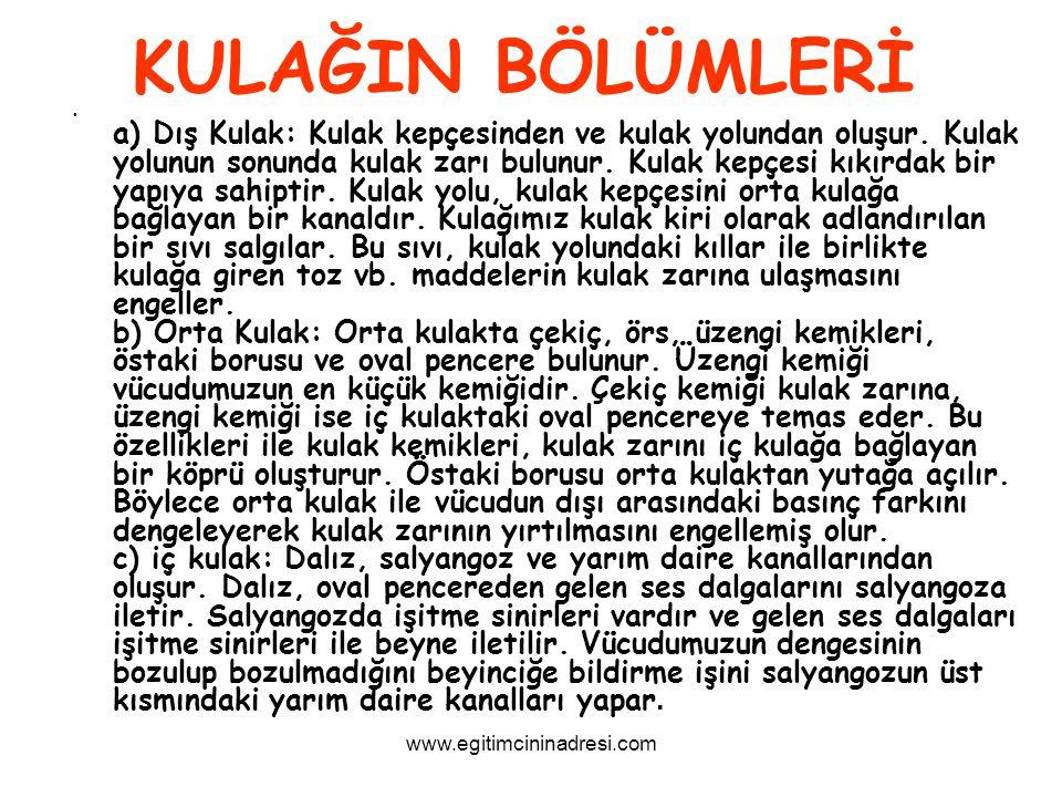 KULAĞIN BÖLÜMLERİ www.egitimcininadresi.com