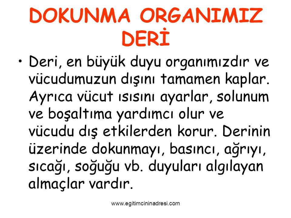 DOKUNMA ORGANIMIZ DERİ