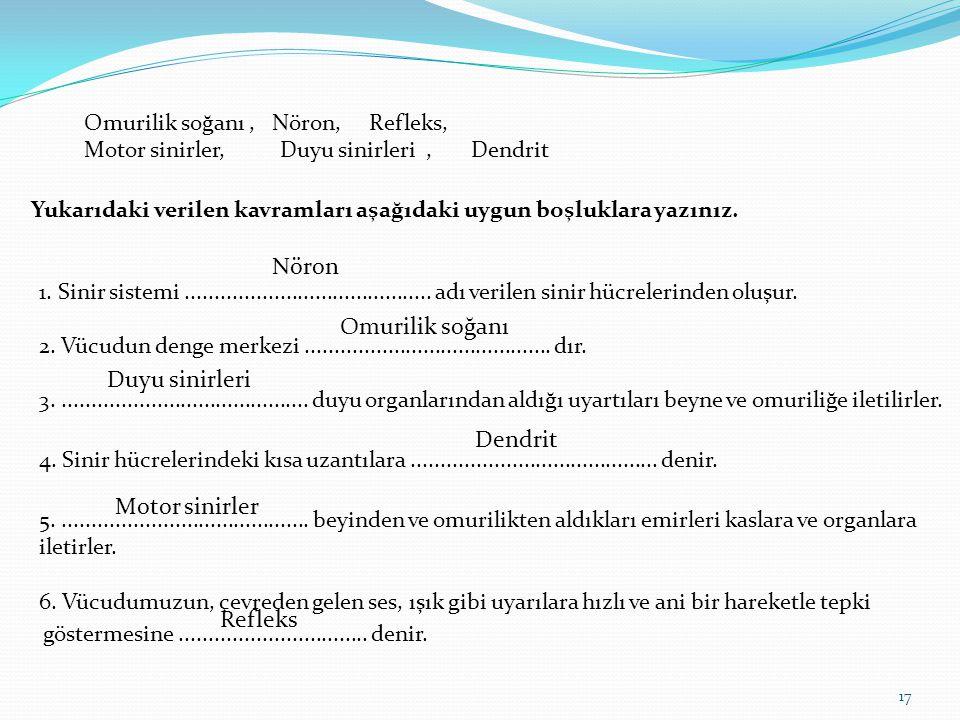 Omurilik soğanı , Nöron, Refleks, Motor sinirler, Duyu sinirleri , Dendrit