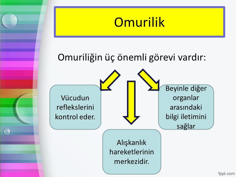 Omurilik Omuriliğin üç önemli görevi vardır: