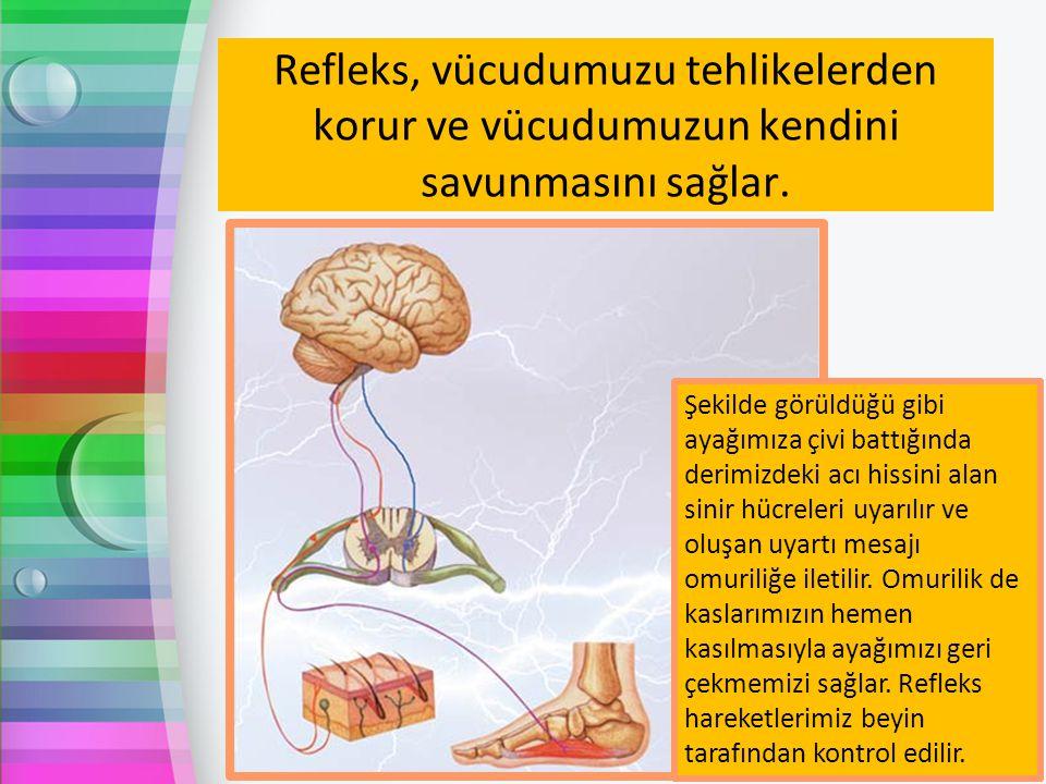 Refleks, vücudumuzu tehlikelerden korur ve vücudumuzun kendini savunmasını sağlar.