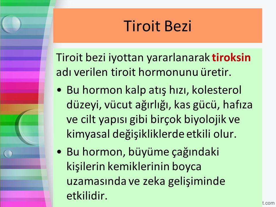 Tiroit Bezi Tiroit bezi iyottan yararlanarak tiroksin adı verilen tiroit hormonunu üretir.