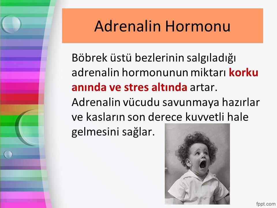 Adrenalin Hormonu