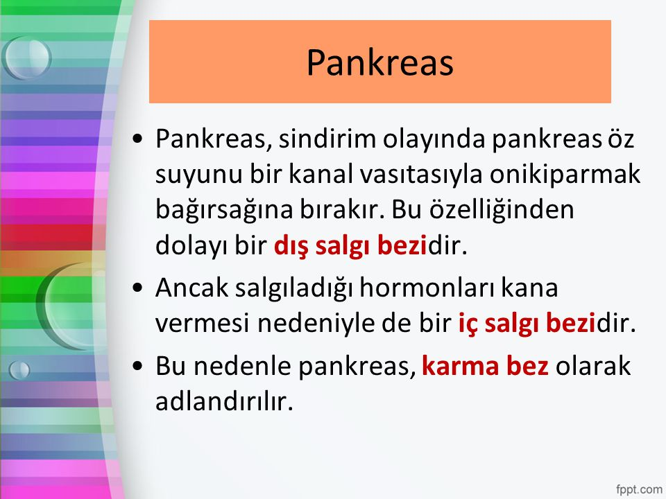 Pankreas Pankreas.