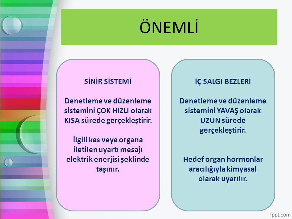 Hedef organ hormonlar aracılığıyla kimyasal olarak uyarılır.