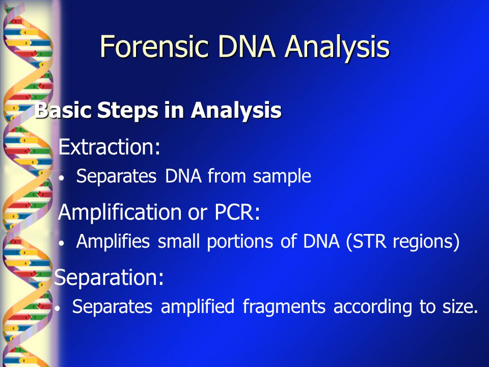 Forensic DNA Analysis Basic Steps in Analysis Extraction: