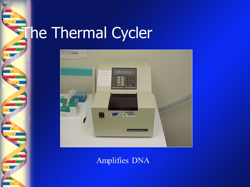 The Thermal Cycler Amplifies DNA