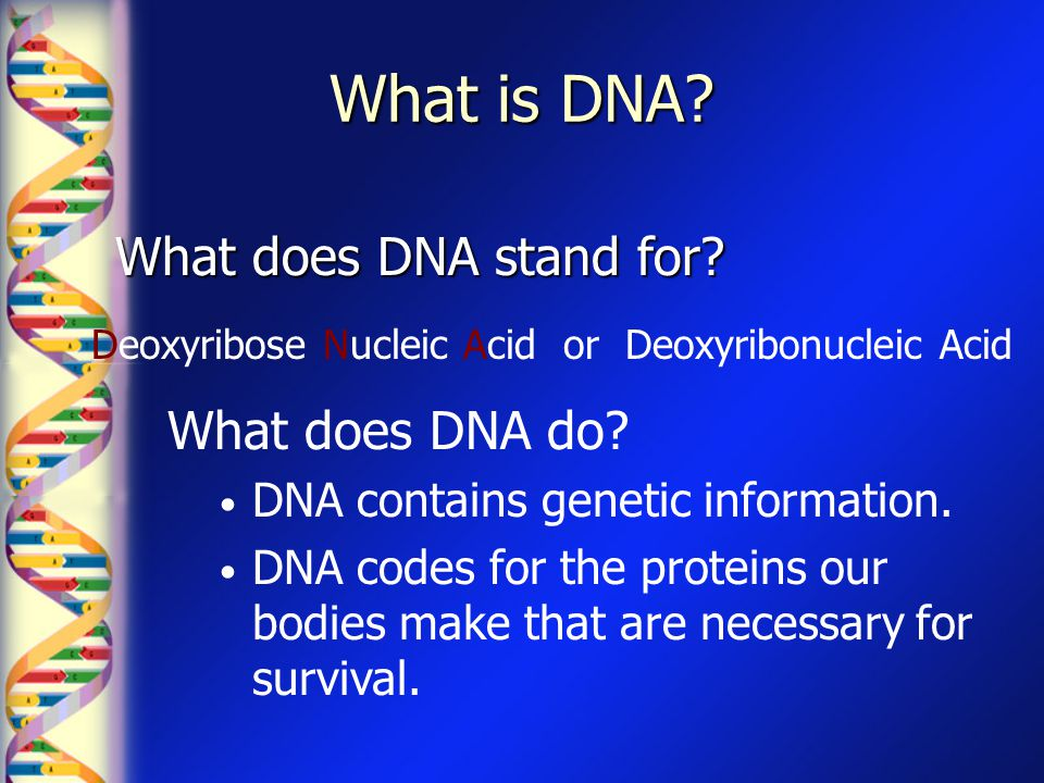 What is DNA What does DNA stand for What does DNA do