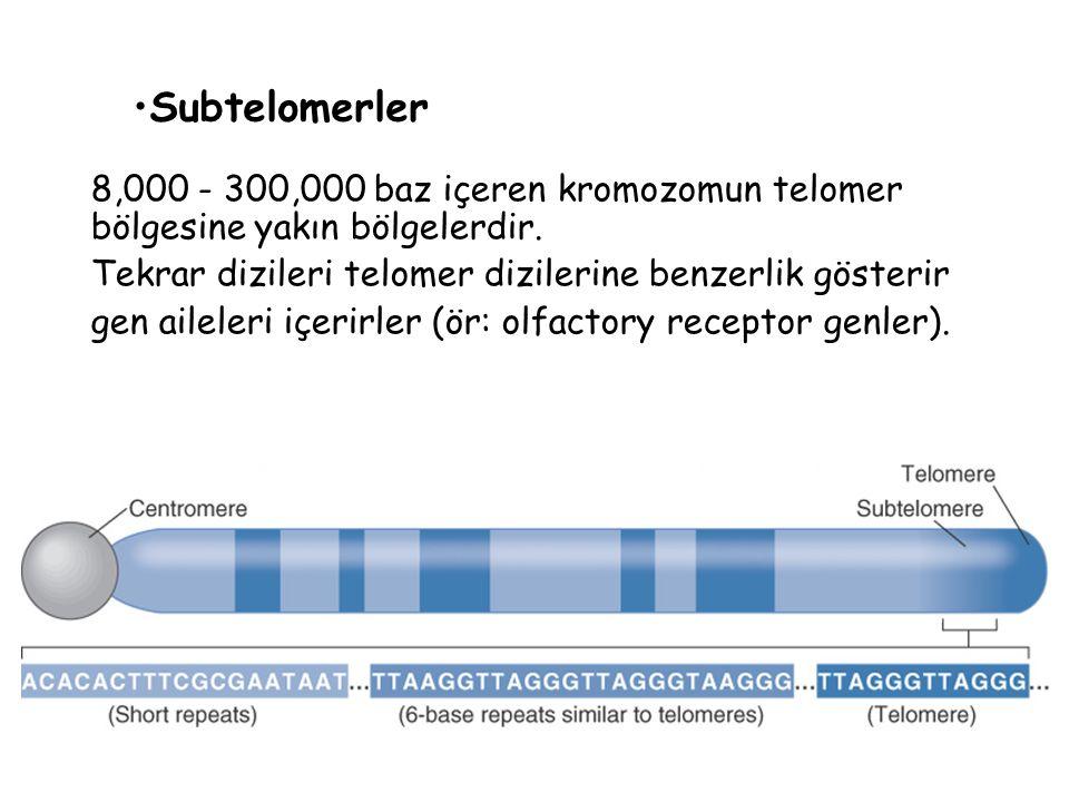 Subtelomerler 8,000 - 300,000 baz içeren kromozomun telomer bölgesine yakın bölgelerdir. Tekrar dizileri telomer dizilerine benzerlik gösterir.