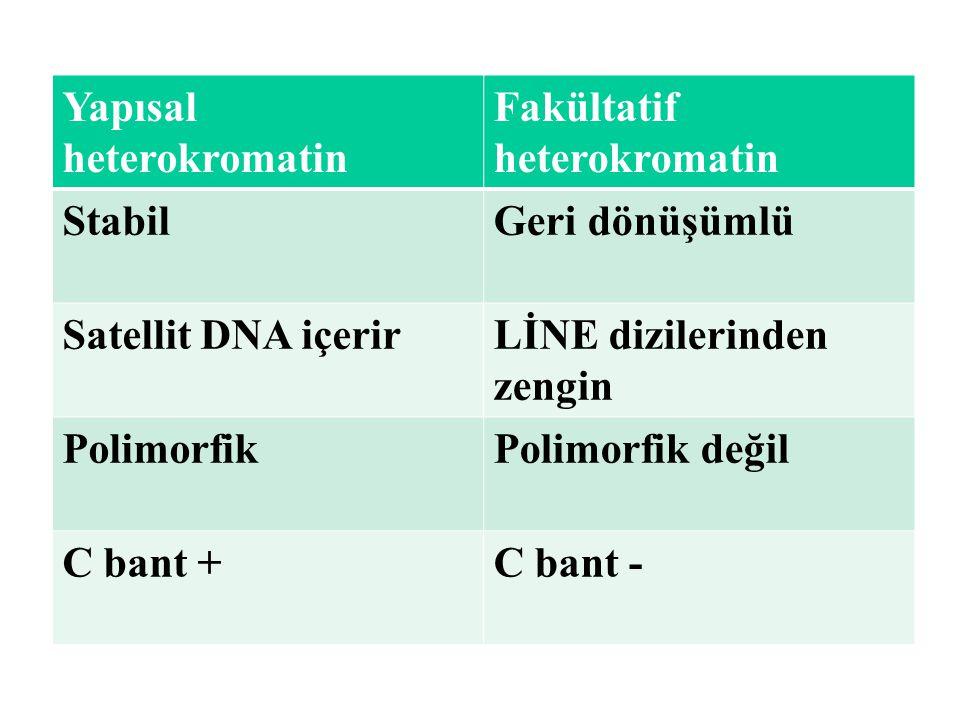 Yapısal heterokromatin