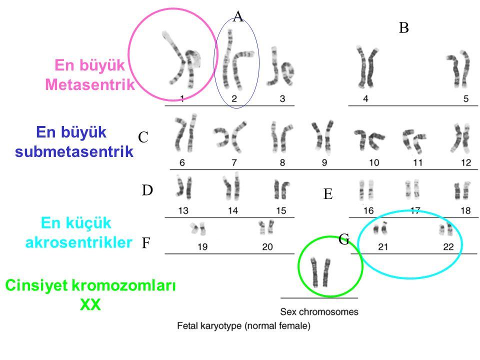 Cinsiyet kromozomları