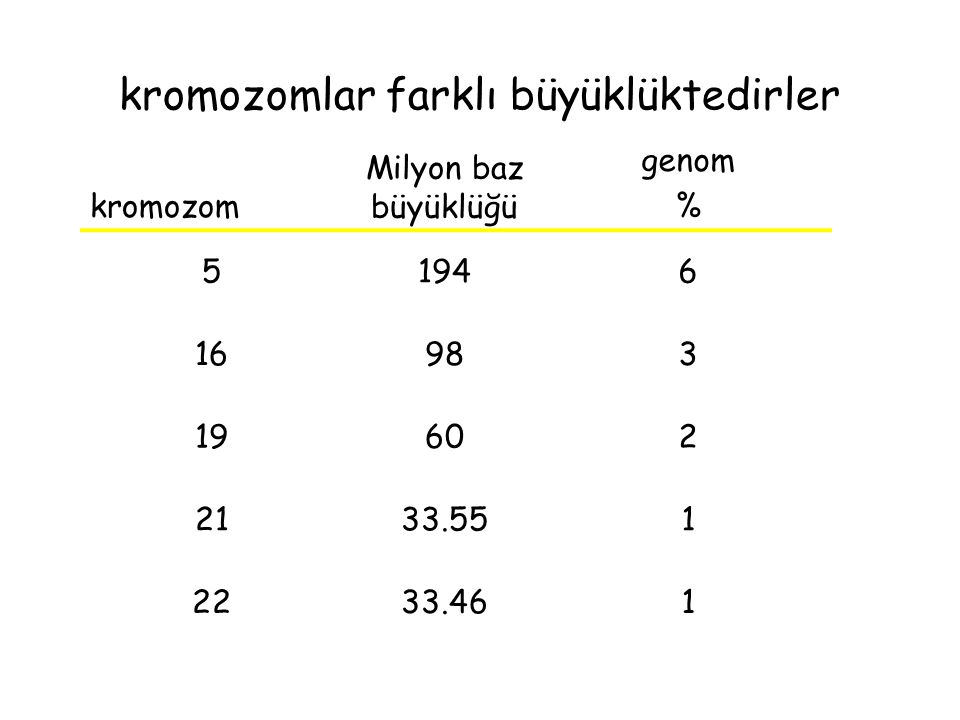 kromozomlar farklı büyüklüktedirler