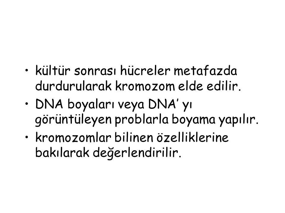 kültür sonrası hücreler metafazda durdurularak kromozom elde edilir.
