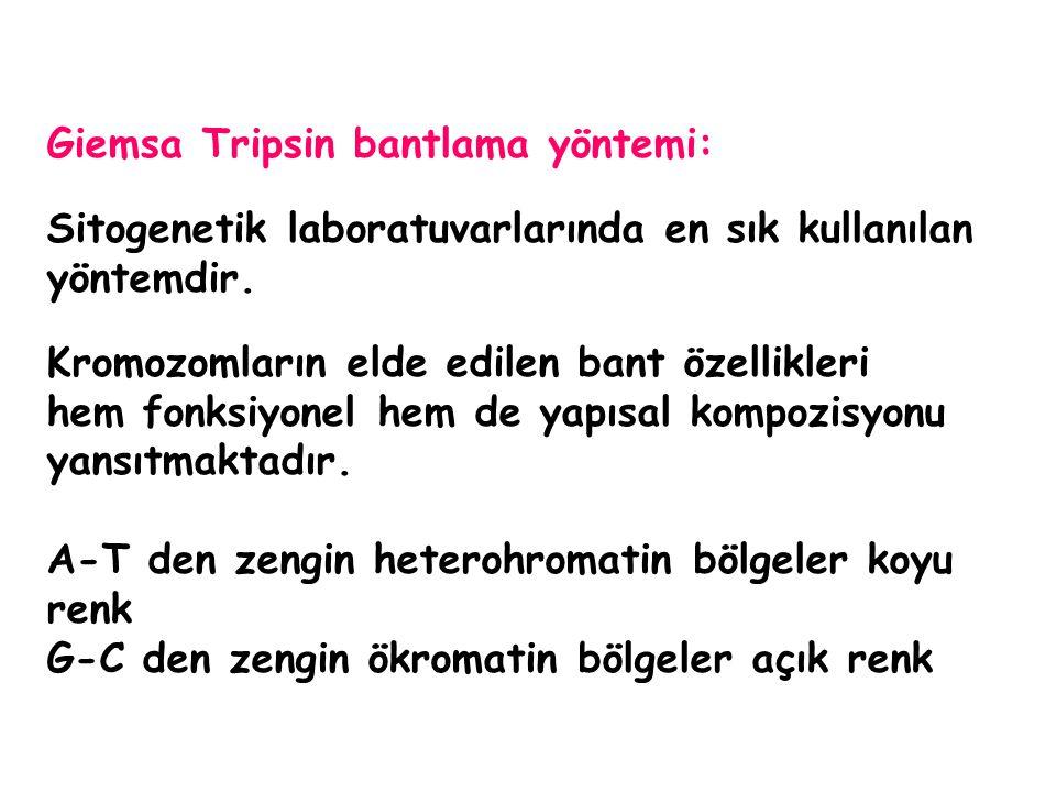 Giemsa Tripsin bantlama yöntemi: