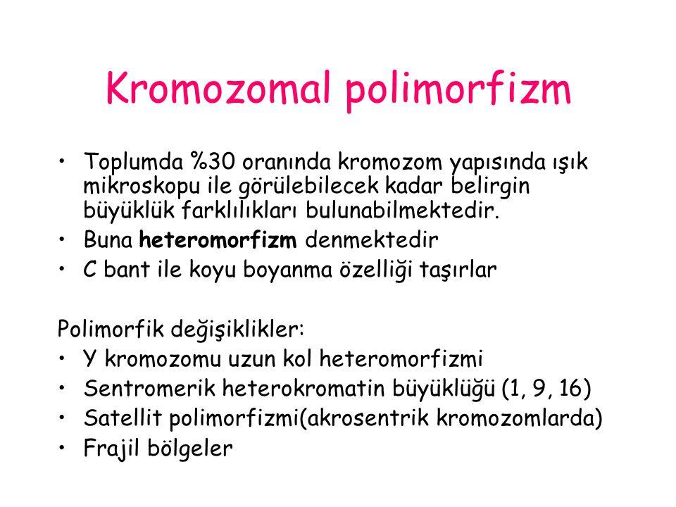 Kromozomal polimorfizm