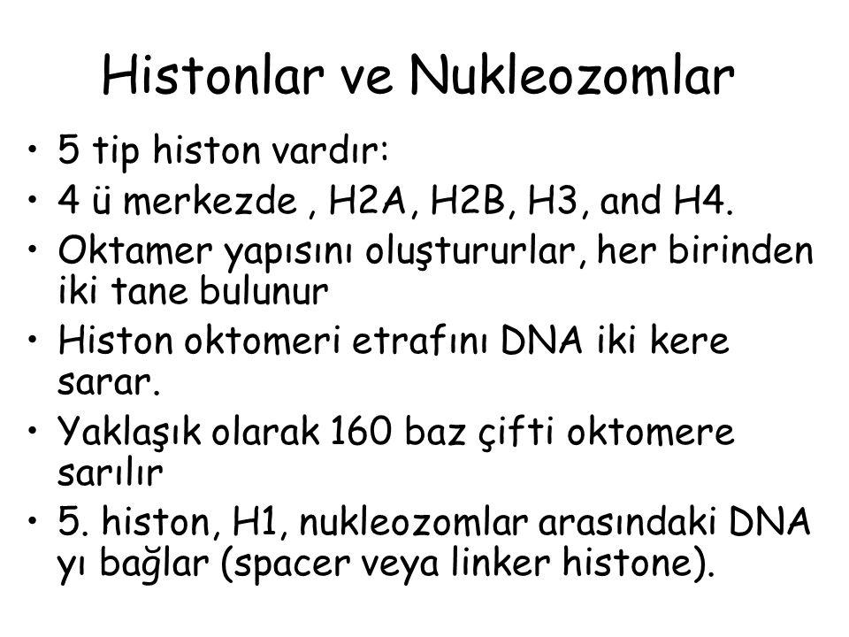 Histonlar ve Nukleozomlar